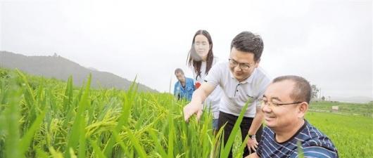 贵州:筑牢粮食安全防线持续优化产业结构